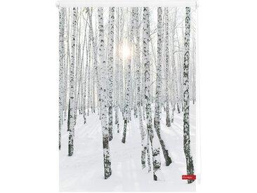 Lichtbick Seitenzugrollo »Klemmfix Motiv Birkenwald«, H/B 150/45 cm, weiß