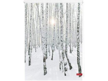 Lichtbick Seitenzugrollo »Klemmfix Motiv Birkenwald«, H/B 150/120 cm, weiß