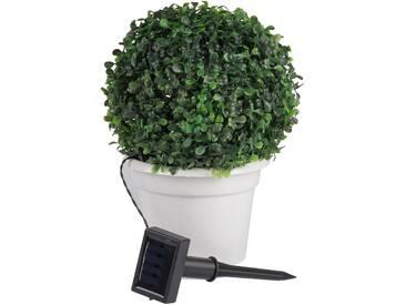 Kunstpflanze Buchsbaum, B24 x H31 x L24 cm Boltze