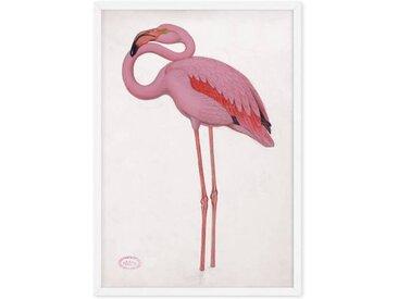 Vintage Flamingo from the Natural History Museum, gerahmter Kunstdruck (A3), Mehrfarbig und Weiss