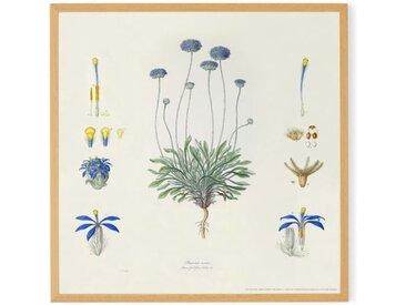 Vintage Floral by the Natural History Museum, gerahmter Kunstdruck (50 x 50 cm), Gruen