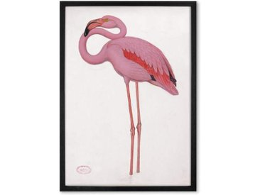 Vintage Flamingo from the Natural History Museum, gerahmter Kunstdruck (A2), Mehrfarbig und Schwarz