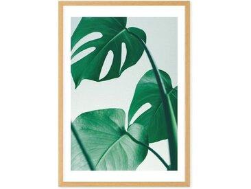 Monstera Plant, mit Rahmen (65 x 90 cm)