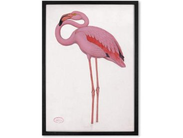 Vintage Flamingo from the Natural History Museum, gerahmter Kunstdruck (A1), Mehrfarbig und Schwarz
