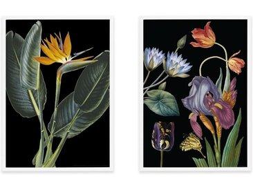 2 x Vintage Dark Florals from the Natural History Museum, gerahmte Kunstdrucke (A2), Mehrfarbig und Weiss