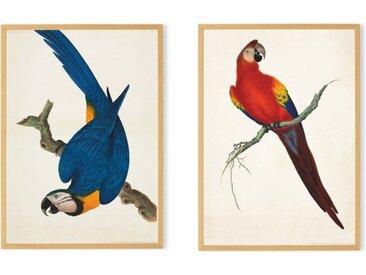 2 x Vintage Parrots by the Natural History Museum, gerahmter Kunstdruck (A2), Gruen und Blau