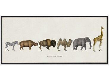 Vintage Quadrupedal Mammals from the Natural History Museum, gerahmter Kunstdruck (30 x 70 cm), Mehrfarbig und Schwarz
