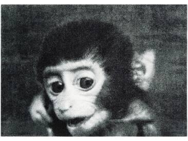 Fußmatte »Monkey«, MINT RUGS, rechteckig, Höhe 7 mm, In- und Outdoor geeignet, waschbar, grau, 50x70 cm