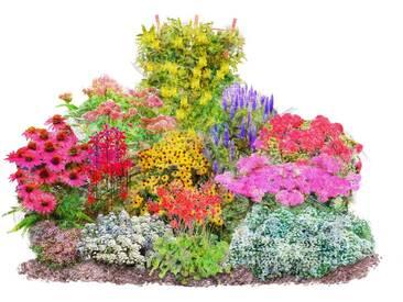 BCM Pflanzenset »Vielfältiger Staudenreigen«, 12 Pflanzen, bunt, 0, 12 Pflanzen, bunt