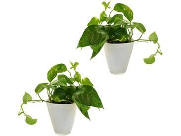 Dominik DOMINIK Zimmerpflanze »Efeututen«, Höhe: 30 cm, 2 Pflanzen in Dekotöpfen, grün, 2 Pflanzen, grün
