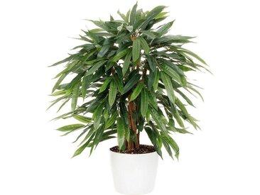 Kunstpflanze »Weeping-Ficus«, grün, grün