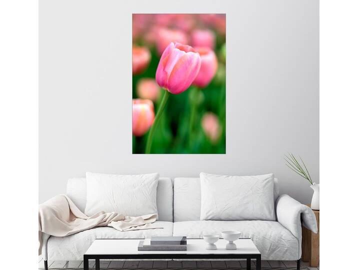 Posterlounge Wandbild »Einzelne rosa Tulpe«, bunt, Poster, 20 x 30 cm, bunt Pink/Rosa