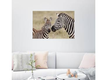 Posterlounge Wandbild - James Hager »Common zebra or Burchells zebra (Equus burch...«, natur, Acrylglas, 120 x 80 cm, naturfarben