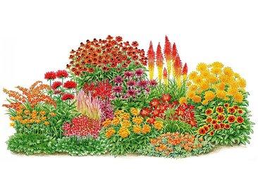 BCM Balkonpflanzen-Set »Sonnenfeuer«, 14 Pflanzen, bunt, 0, 14 Pflanzen, bunt