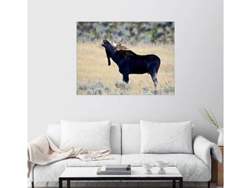 Posterlounge Wandbild - James Hager »Röhrender Elch, Wasatch Mountain State Park«, natur, Holzbild, 130 x 100 cm, naturfarben