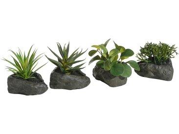 Home affaire Kunstpflanze »Sukkulenten«