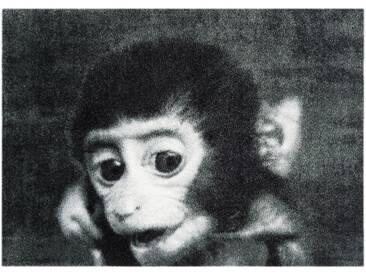 MINT RUGS Fußmatte »Monkey«, rechteckig, Höhe 7 mm, In- und Outdoor geeignet, waschbar, grau, 7 mm, grau