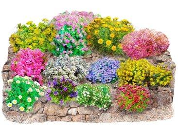 BCM Beet & Balkonpflanze »Trockenmauer-Set«, bunt, 0, 12 Pflanzen, bunt