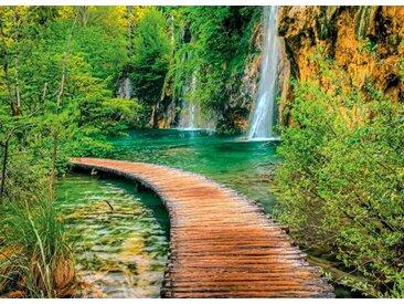 Fototapete »Steg durch den Wald«