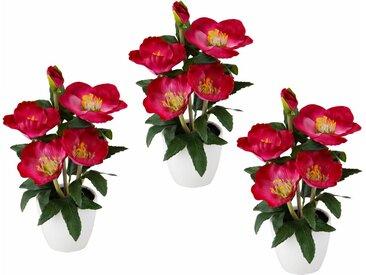 Christrose i.T. 3er Set, 23cm, rosa, rosa