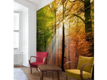 Bilderwelten Vliestapete Quadrat »Morning Light«, bunt, 336x336 cm, Farbig
