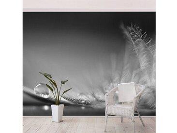Bilderwelten Vliestapete Breit »Story of a Waterdrop Black White«, grau, 225x336 cm, Grau