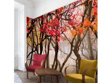 Bilderwelten Vliestapete Premium Breit »Japan im Herbst«, rot, 255x384 cm, Rot