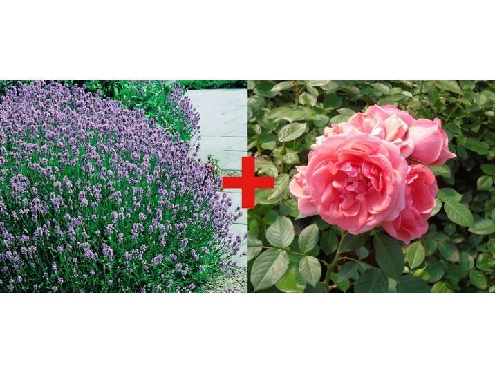 BCM Set: Beetrose »Rose Kimono & Lavendel«, lil...