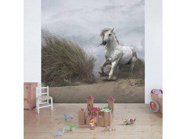 Bilderwelten Vliestapete Quadrat »Weißes Pferd in den Dünen«, bunt, 288x288cm, Farbig