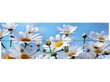 Artland Wandgarderobe »Monia: Blumen - Margeriten«, weiß, 30 x 90 x 2,8 cm, Weiß