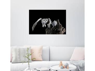 Posterlounge Wandbild - James Hager »Eule im Angriff«, schwarz, Holzbild, 150 x 100 cm, schwarz