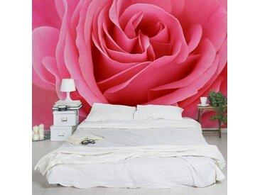 Bilderwelten Vliestapete Breit »Top Rosen Tapeten«, rot, Lustful Pink Rose, 190x288 cm, Rot