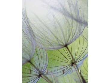 Artland Schlüsselbrett »Anette Linnea Rasmus: Pusteblumen-Samen«, grün, 25 x 20 x 1,6 cm, Grün