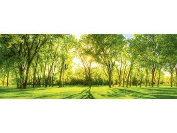 Artland Schlüsselbrett »Landschaften Wiesen & Bäume Fotografie Grün«, grün, 14,8x40x1,6 cm, Grün