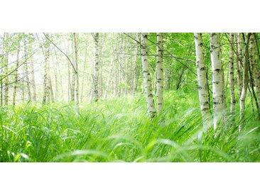 Papermoon PAPERMOON Glas-Infrarotheizung »EcoHeat«, Motiv Birch Meadow, 750 W, rahmenlos, grün, grün