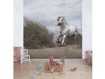 Bilderwelten Vliestapete Premium Quadrat »Weißes Pferd in den Dünen«, bunt, 288x288cm, Farbig