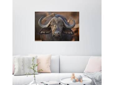 Posterlounge Wandbild - James Hager »Madenhacker auf einem Kaffernbüffel«, grau, Holzbild, 180 x 120 cm, grau