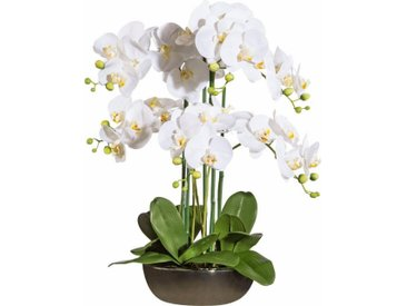 Kunstorchidee, weiß, weiß