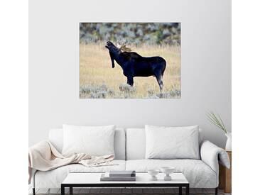 Posterlounge Wandbild - James Hager »Röhrender Elch, Wasatch Mountain State Park«, natur, Holzbild, 160 x 120 cm, naturfarben