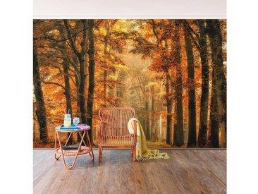 Bilderwelten Vliestapete Quer »Märchenwald im Herbst«, bunt, 320x480cm, Farbig