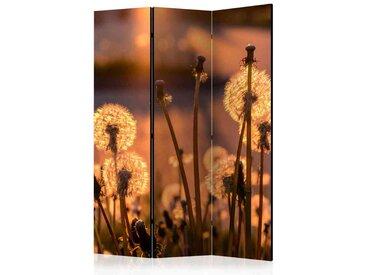 Paravent Sichtschutz mit Pusteblumen Motiv 135 cm breit